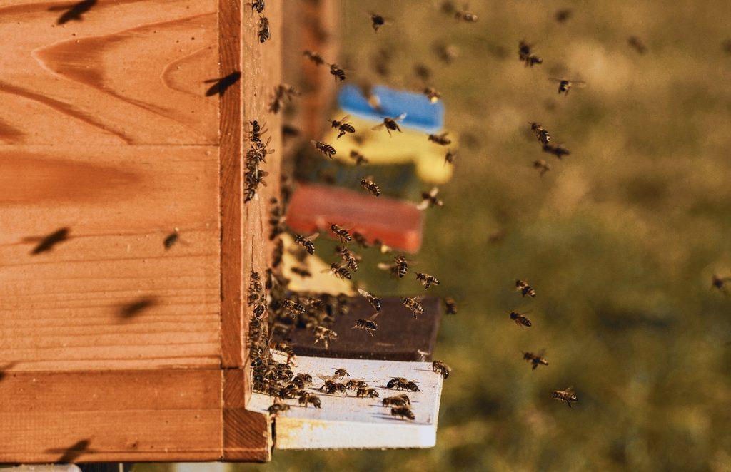 plusieurs ruche dans un jardin