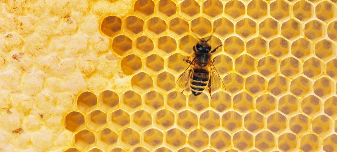 débuter en apiculture