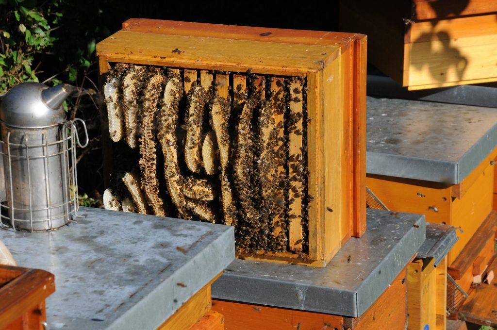 hausse de ruche