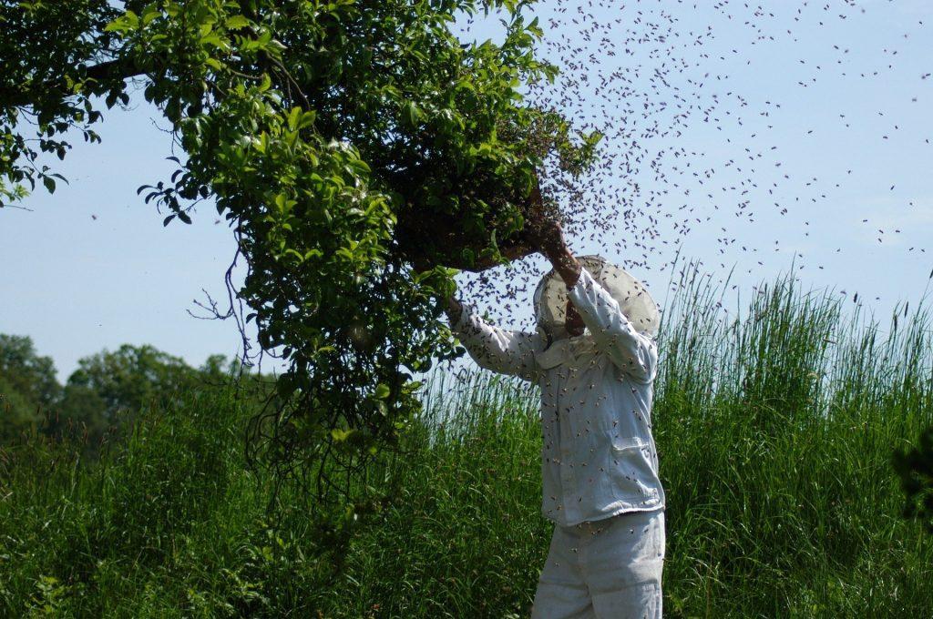 Placer une ruche au bon endroit